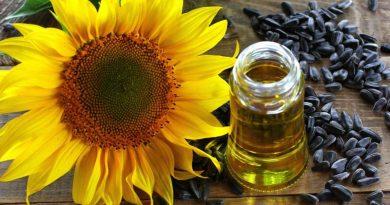 olio esausto vegetale