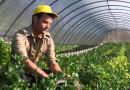 agricoltori coldiretti