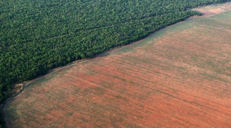 Deforestazione in Brasile